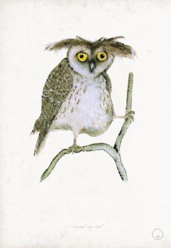 Oriental Scops Owl - artist signed print